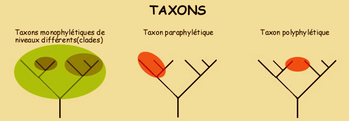 Différents taxons