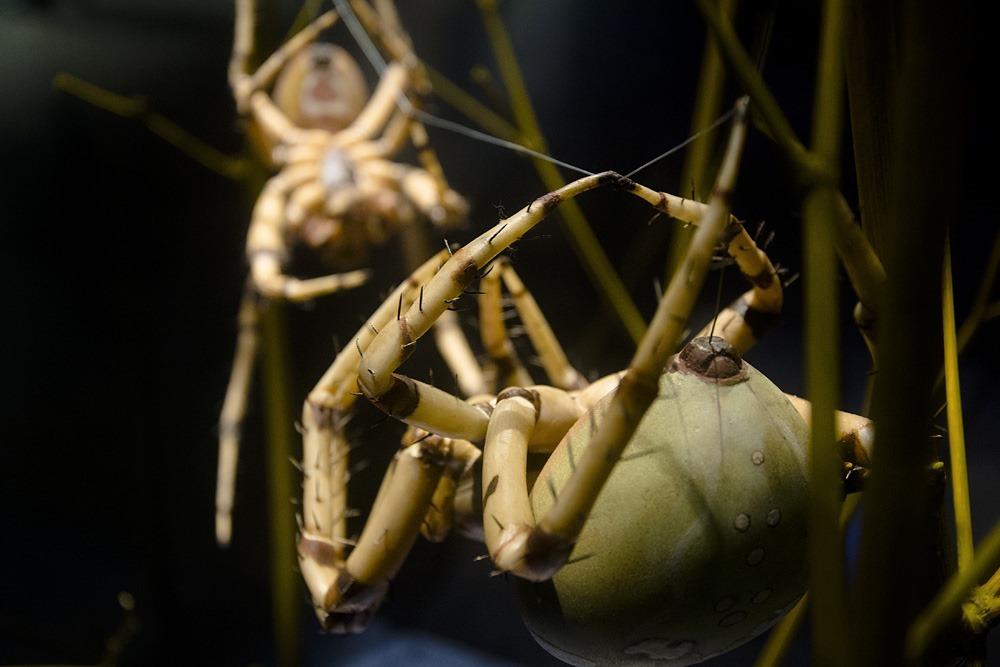 Araignée, Alfred Keller (5)