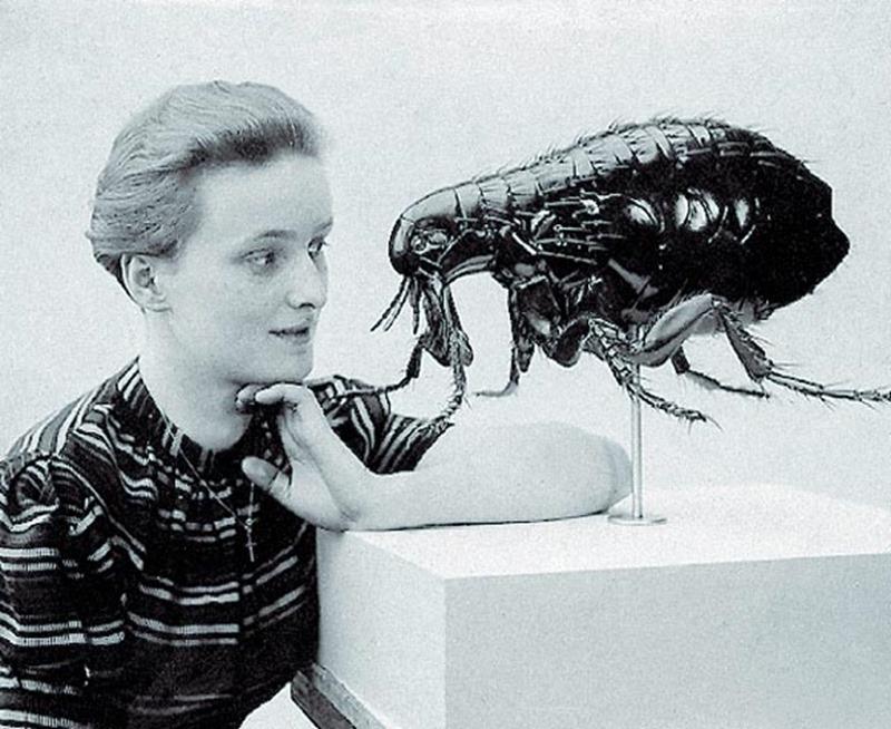 Pulex irritans, Alfred Keller