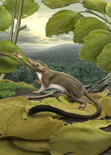 Reconstitution de l'ancêtre de tous les mammifères placentaires, Carl Buell