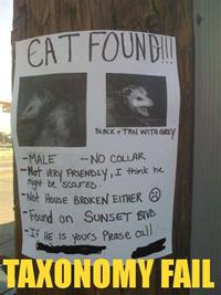 Cat Found?