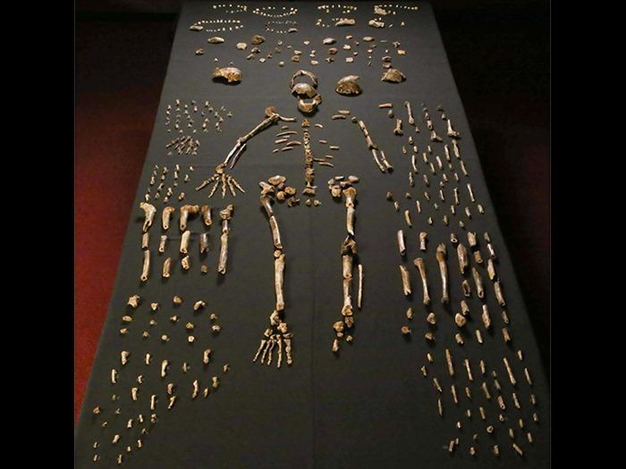 Homo naledi, John Hawks, Wits University