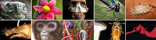 Top Ten des espèces Strange and Funky de 2016