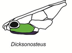 Dicksonosteus