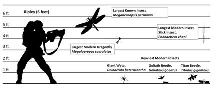 Echelle de taille pour la comparaions des plus grands insectes