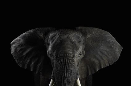 Elephant, Brad Wilson
