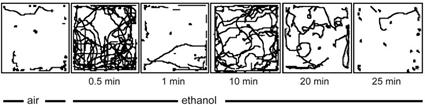 Effet de l'éthanol sur la locomotion