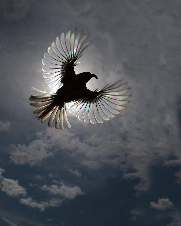 photo d'une mésange charbonnière sous la lumière du soleil alors qu'elle atterrit dans son nid. Crédit Thomas Møʀᴄʜ