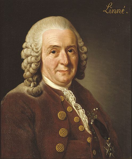 Carl von Linn par Alexander Roslin