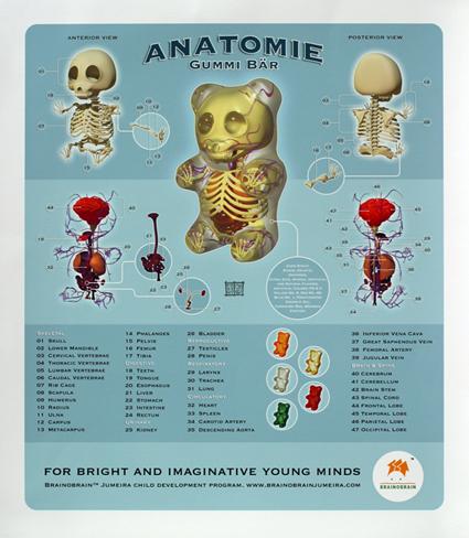 Anatomie de l'ourson de gélatine