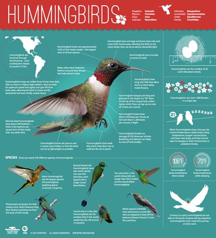 Infographie sur les colibris