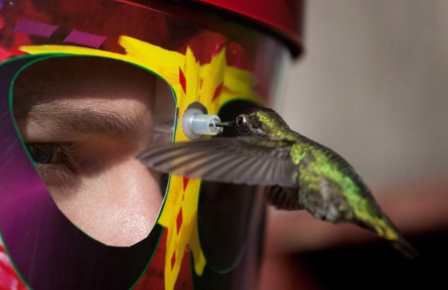 Eye to Eye Hummingbird feeding mask
