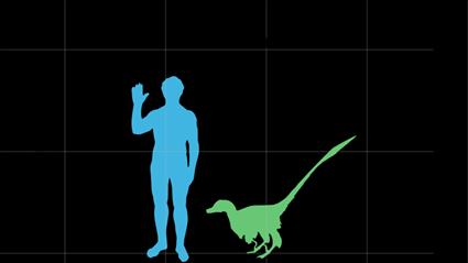 Velociraptor version la vraie vie