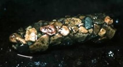 Fourreau naturel de larve de trichoptère