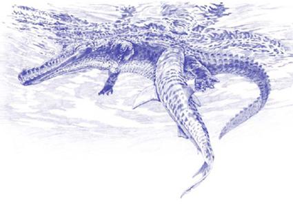 Illustration de T Schierer montrant un requin tigre qui, en se jetant sur sa proie, perfore les intestins et malencontreusement mord dans son contenu...