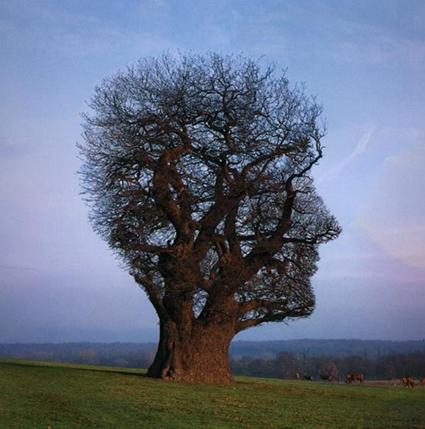 C'est vrai ça, pourquoi un arbre?