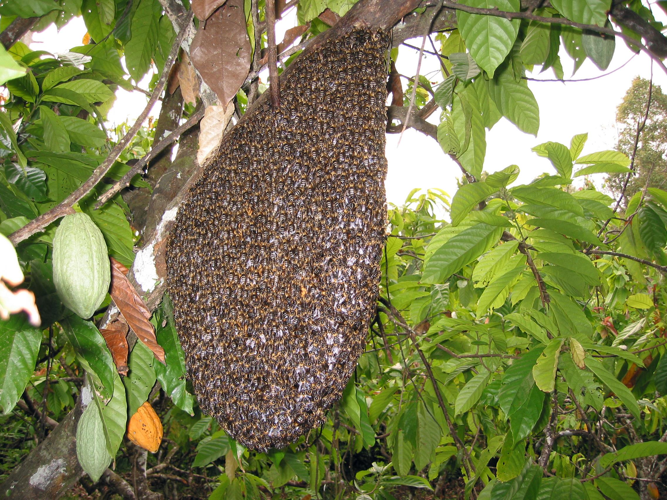Nid d abeilles - Abeille nid dans le sol ...