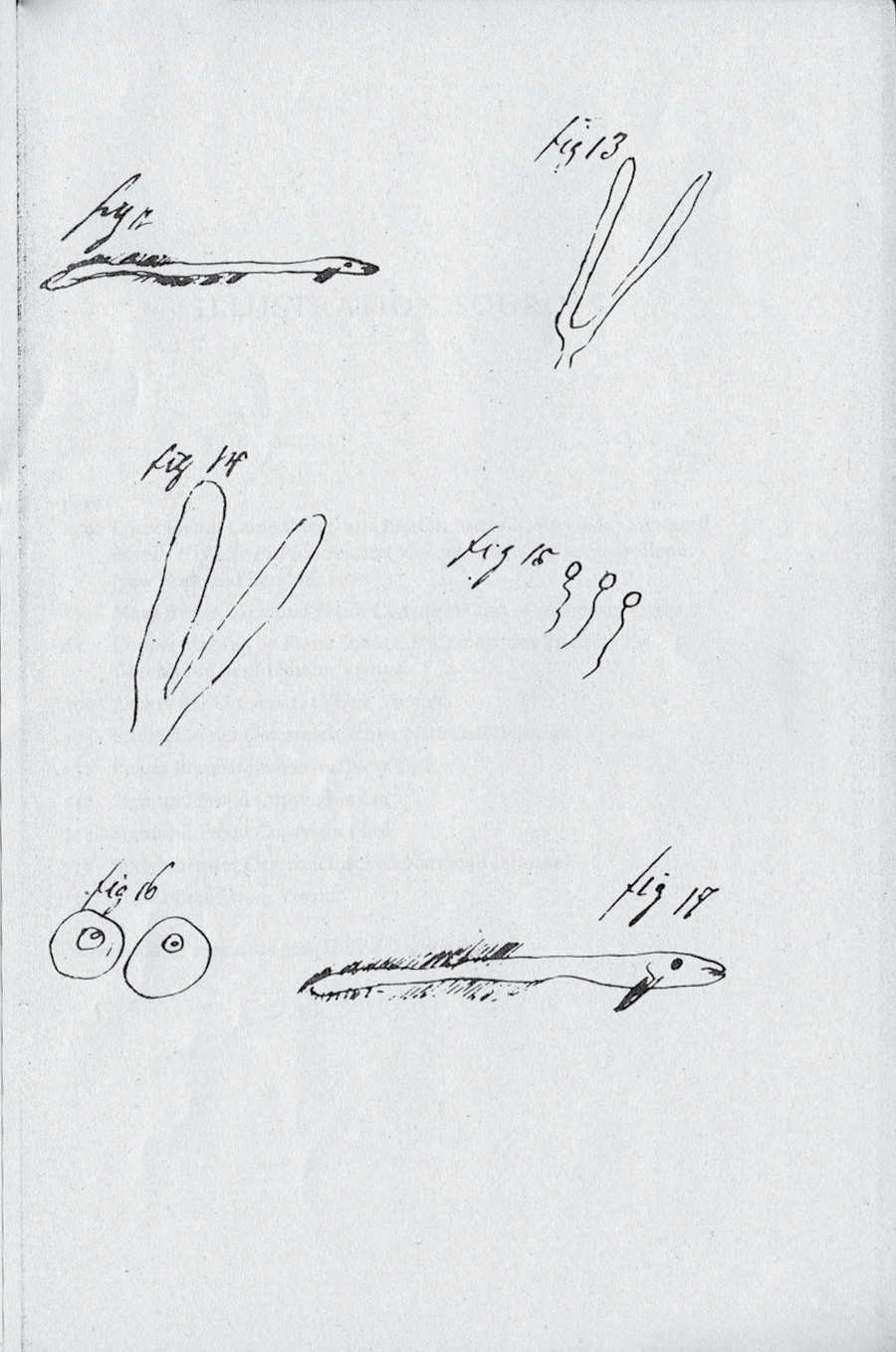 Dessins de Sigmund Freud