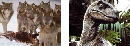 carnivores: Canis lupus et Velociraptor stevenspielbergis