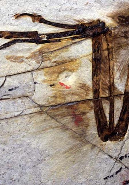 plumes étapes 3 sur Sinornithosaurus